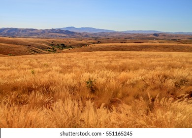 Beautiful grassland in the Western part of Madagascar
