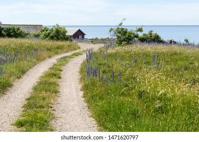 Beautiful gravel road to the coast in summer season at the swedish island Oland