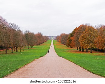 Beautiful gravel and sand road in the center of picture, green grass and orange pine tree on the left and right side. Landscape of Autumn season.
