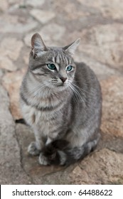 Beautiful gray cat sitting on the ground