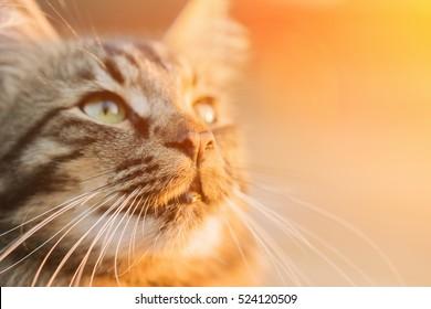 Beautiful gray cat in the sunlight