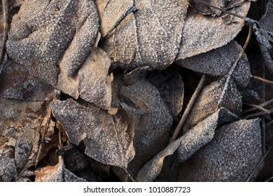 Beautiful gray frozen fallen leaves in the sunlight close-up background