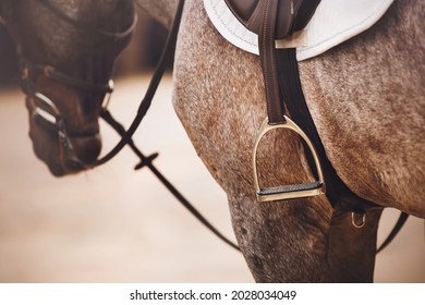 A beautiful gray horse is wearing a black leather saddle, a white saddlecloth, a bridle and a stirrup. Equestrian sports and sports ammunition.