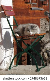 beautiful gray and white long haired cat sitting on a chair in the sun