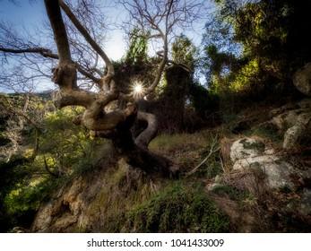The beautiful Greek nature