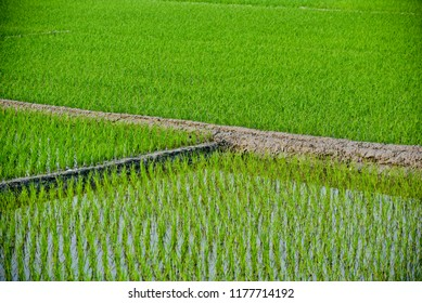 A beautiful green agricultural field isolated unique photo