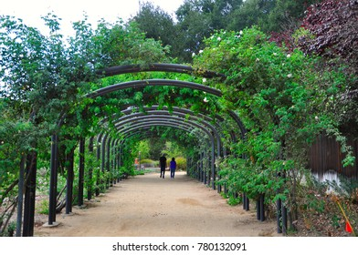Beautiful Green arbours in the park