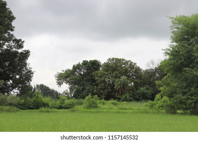 A beautiful green background included green grasd and more big trees. Its view in rainy season.  White and black cloud. Nutural view from rural area.