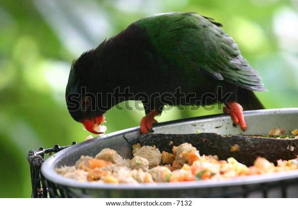 beautiful green bird at lunchtime