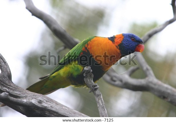 beautiful green bird perching on a branch