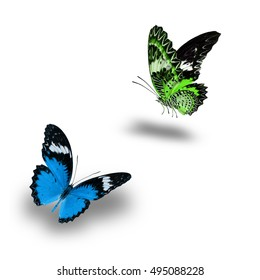 Beautiful Green and Blue butterfly flying up