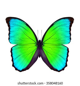 49d3b57df Beautiful green and blue butterfly, the Blue Morpho butterfly  (disambiguation) or Sunset Morpho