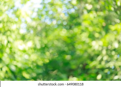 beautiful green bokeh light in summer nature, abstract blur image background