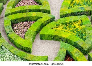 beautiful green boxwood garden pruned into shapes