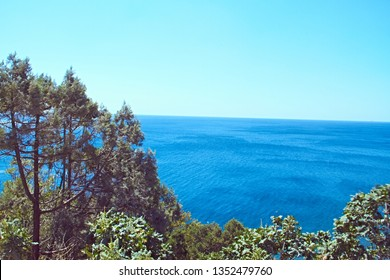 A beautiful green branched tree grows on the coast of the sea around the bushes, behind the boundless sea