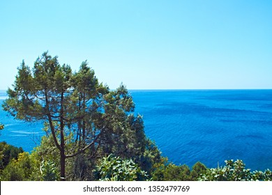 Beautiful green branched tree grows on the coast of the sea around the bushes, behind the azure endless sea