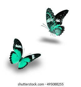 Beautiful Green butterfly flying up