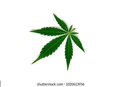 Beautiful green cannabis leaf macro top view isolated weed