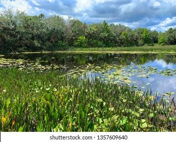 Beautiful Green Cay Nature Center & Wetlands located in Boynton Beach, Florida, USA. Green Cay is a nature center that overlooks 100 acres of constructed wetland.