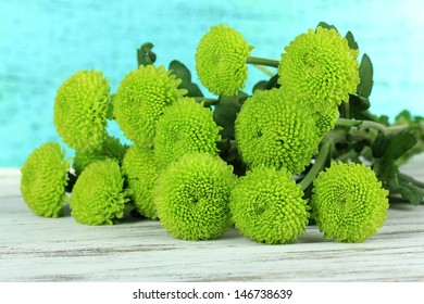Beautiful green chrysanthemum on table on blue background