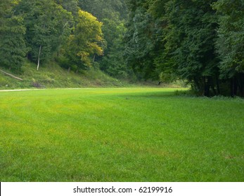 Beautiful green clearing field in a forest - picture with copy-space