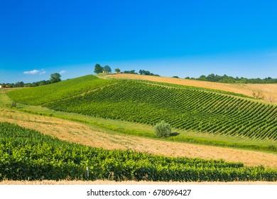 Beautiful green countryside landscape, vineyard in Daruvar region, Croatia