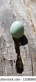 Beautiful green egg bird on a log