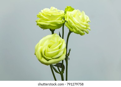 Beautiful green Eustoma russellianum on clean background