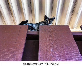 A beautiful green eyed female tortoiseshell cat looks down from high up on a wooden fence underneath a metal roof.
