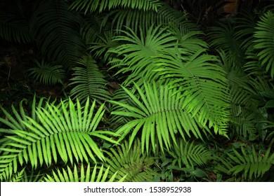 beautiful green fern leaves on black.