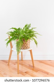 Beautiful green fern plant in a basket on a stylish chair, on wooden floor.