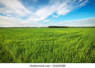 Beautiful green field and blue cloudy sky.