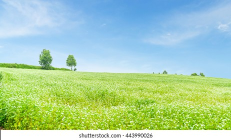 Beautiful green field and blue sky in summer at biei hokkaido japan