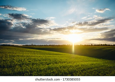 beautiful green field in front of the sunset
