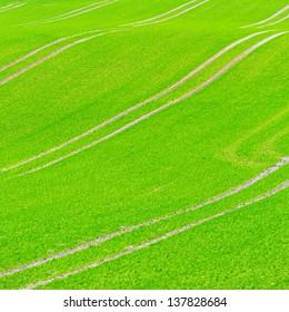 Beautiful green field pattern