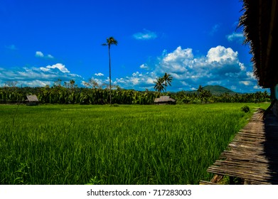 The beautiful green fields of Bohol, Philippines
