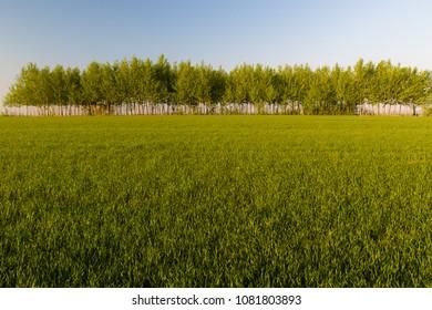 Beautiful green fields in spring