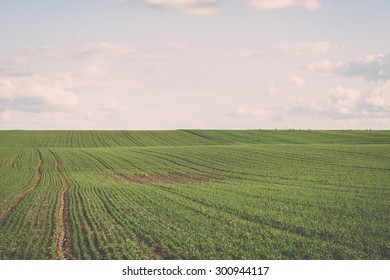 beautiful green fields under blue sky in summer with white clouds and perspective - vintage retro effect