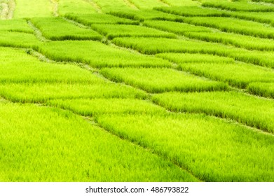 beautiful green fields under blue sky in summer with white clouds and perspective