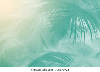 Beautiful green florida keys colors tone  feather texture background with orange light,trends color