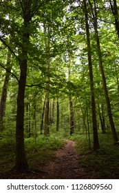 Beautiful green forest.
