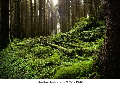 A beautiful green forest
