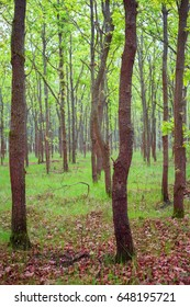 Beautiful green forest after rain