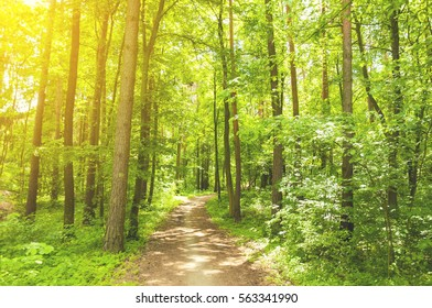 beautiful green forest in the early morning sun shine