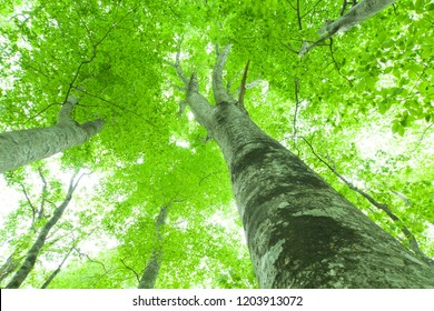 Beautiful green forest in early summer.