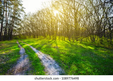 beautiful green forest glade in a rays of evening sun
