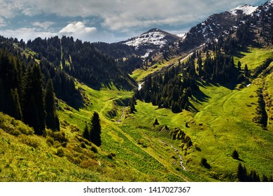 Beautiful green forest hills and Snowy Mountain in the valley against cloudy sky in Kazakhstan