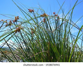 Beautiful green grass with a blue sky and bright background