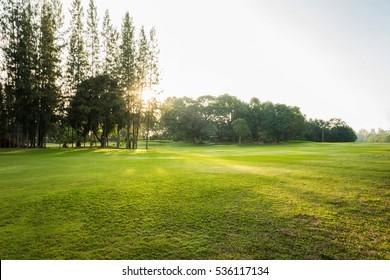 Beautiful Green grass field at the garden park in morning