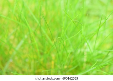 Beautiful green grass on a blurry background..